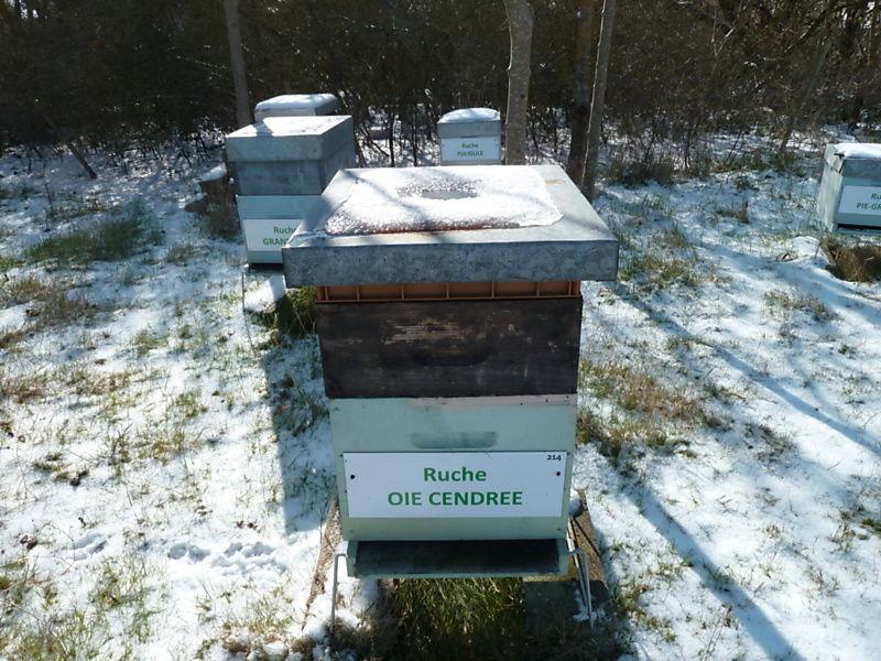 La ruche Oie cendrée