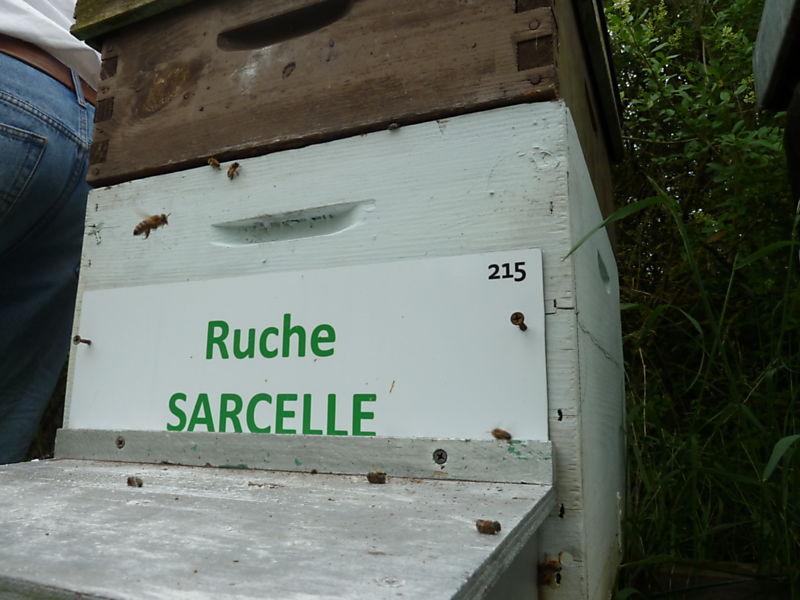 La ruche Sarcelle