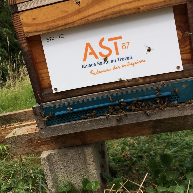 La ruche AST67 - Alsace santé au travail