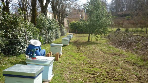 La ruche WKN FRANCE