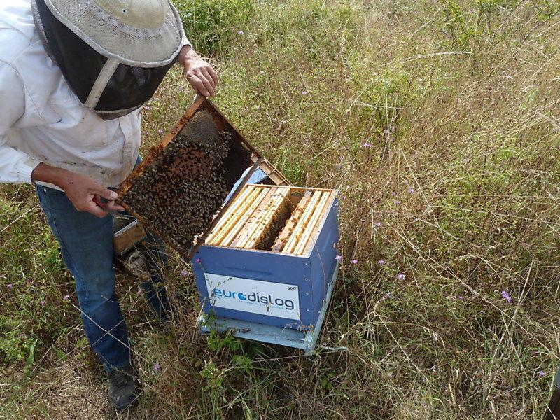La ruche EURODISLOG