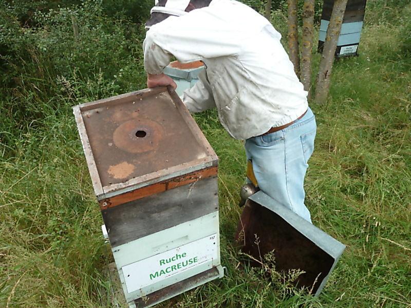La ruche Macreuse