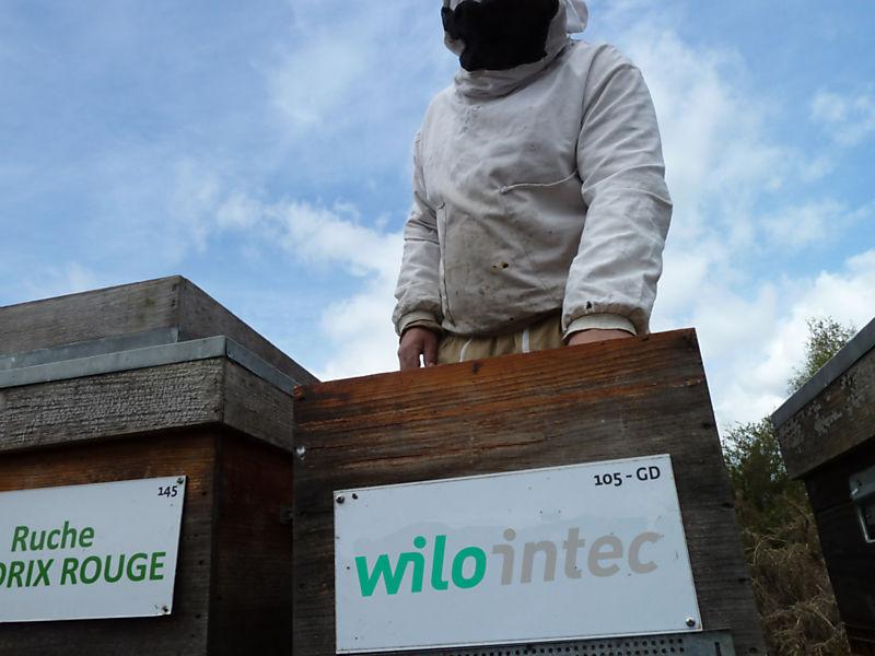 La ruche WILO INTEC