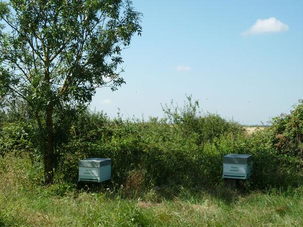 La ruche Garrot