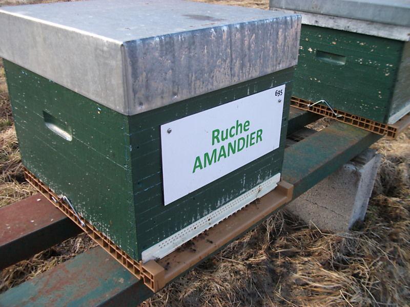La ruche Amandier