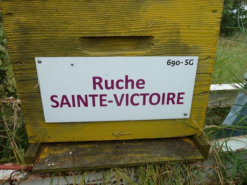 La ruche Sainte-victoire