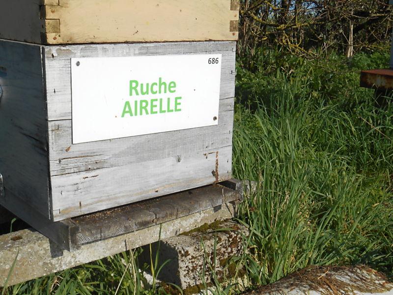 La ruche Airelle