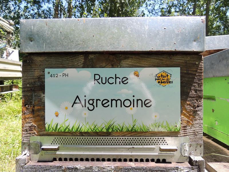 La ruche Aigremoine
