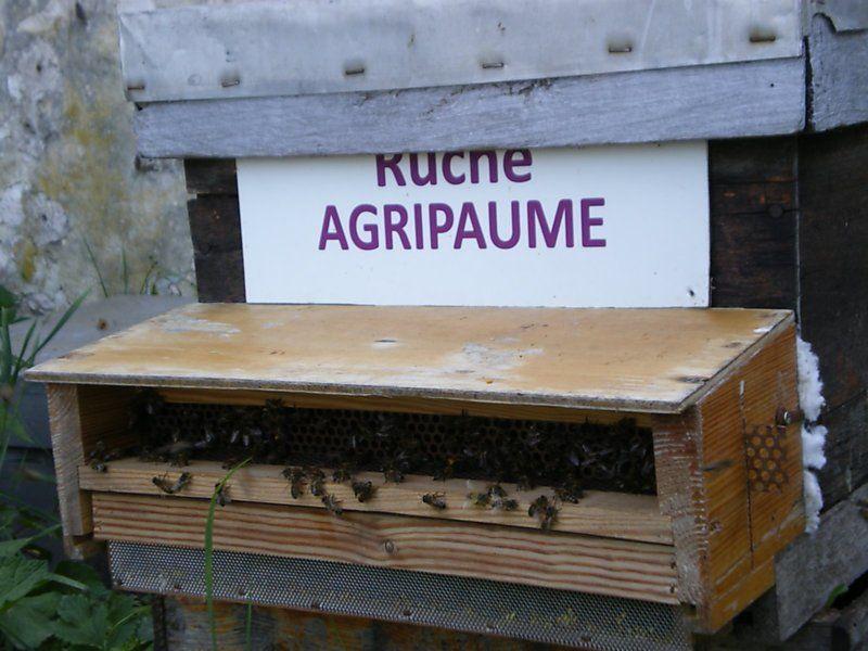 La ruche Agripaume