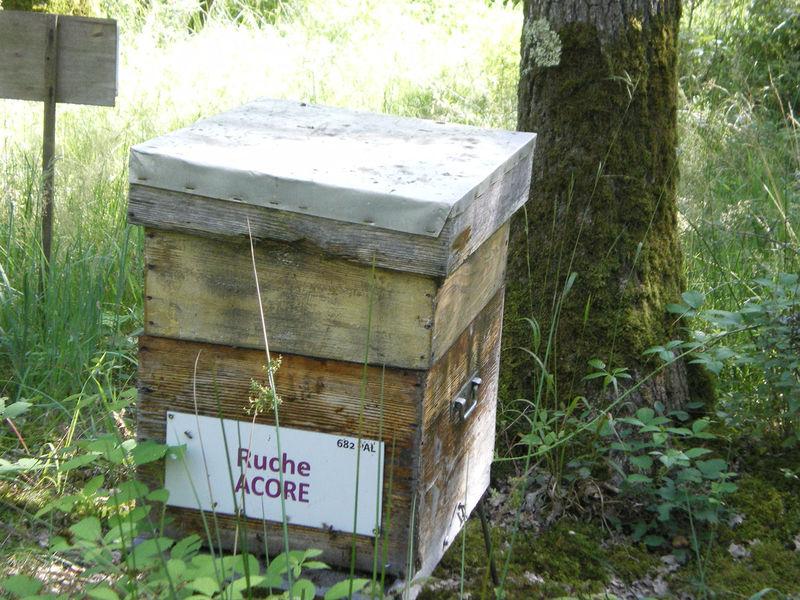 La ruche Acore