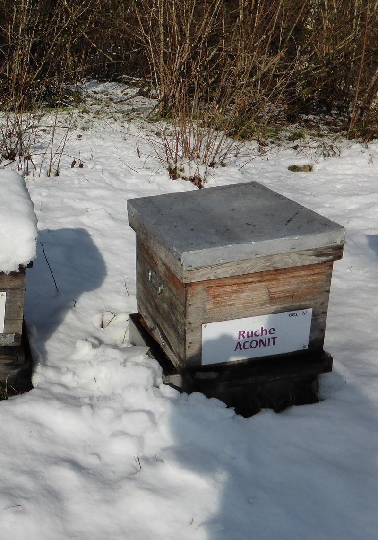 La ruche Aconit