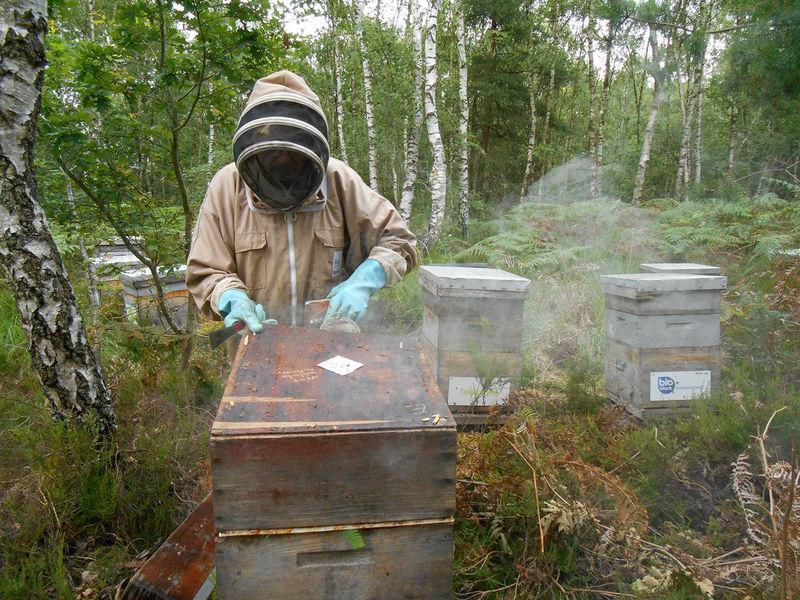 La ruche Achillée