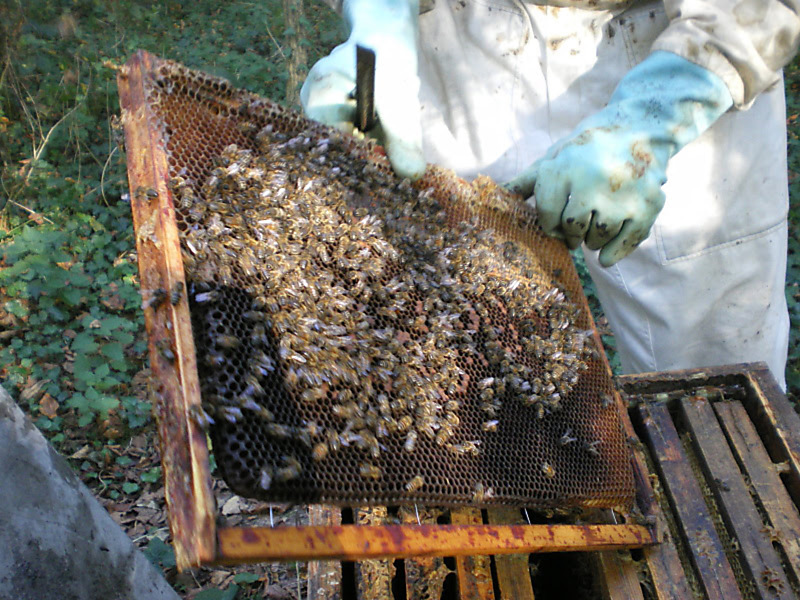 La ruche Acanthe