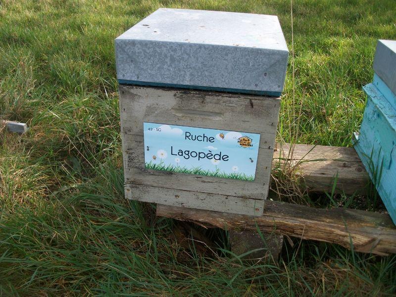La ruche Lagopède