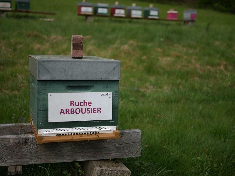 La ruche Arbousier