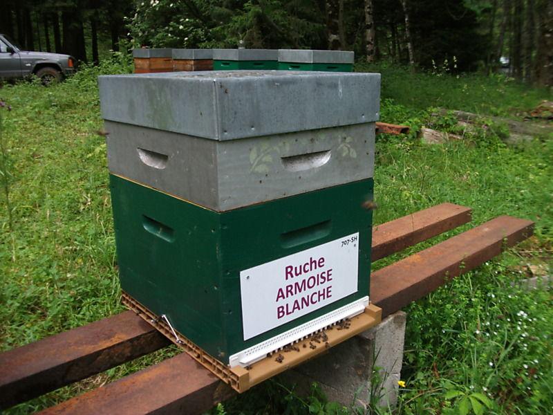 La ruche Armoise blanche