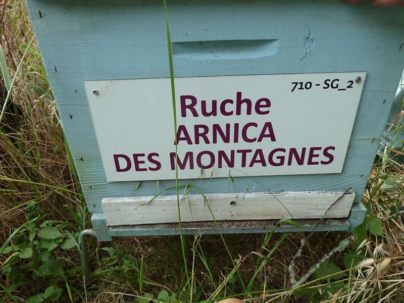 La ruche Arnica des montagnes