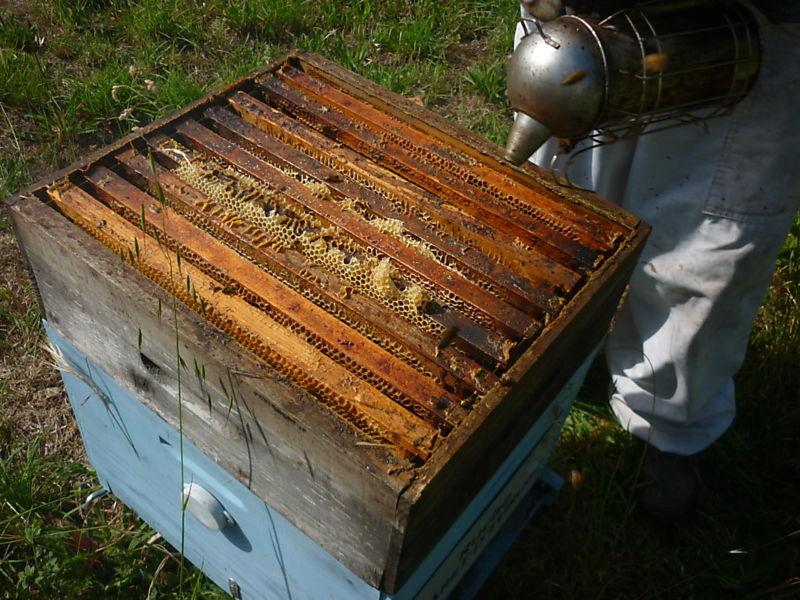 La ruche Asaret d europe