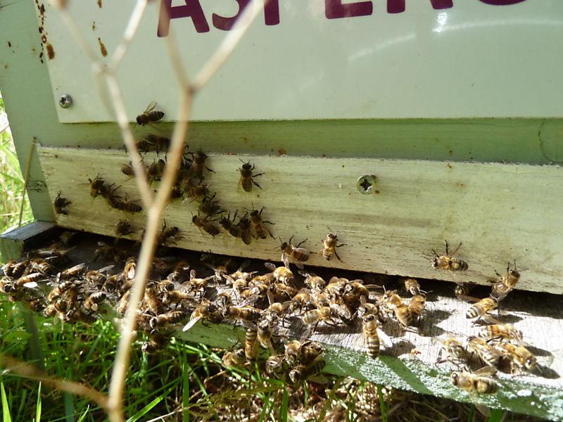 La ruche Aspérule