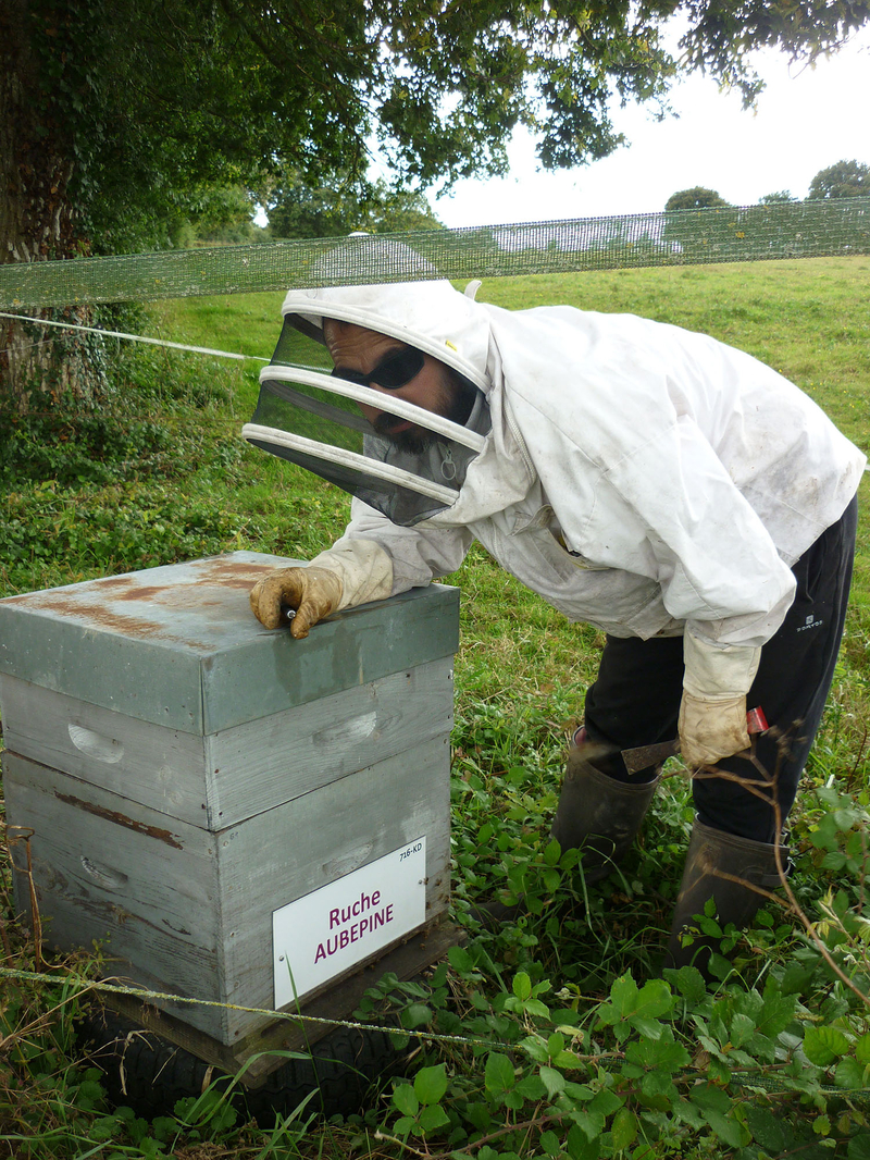 La ruche Aubépine