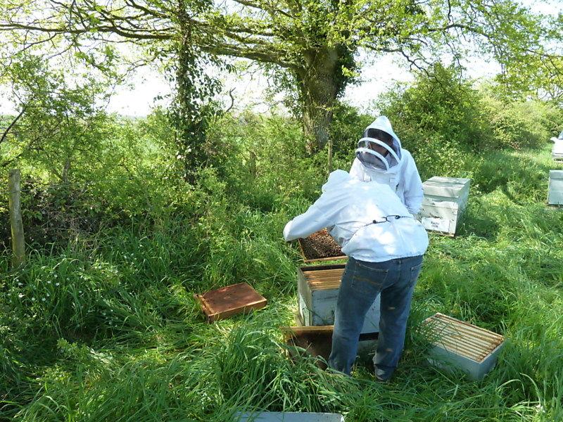 La ruche Basilic