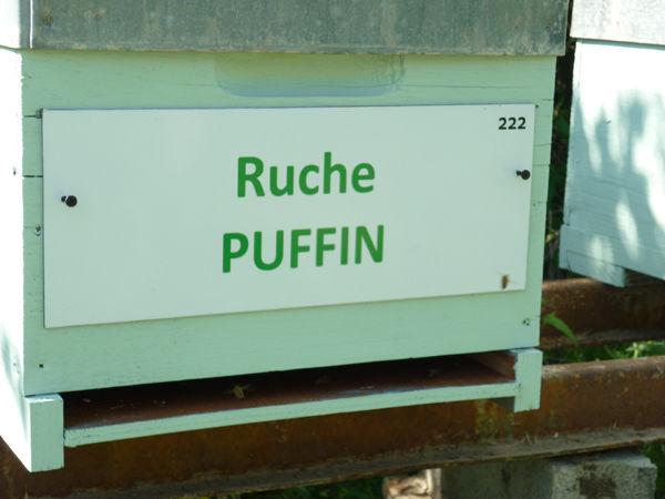 La ruche Puffin