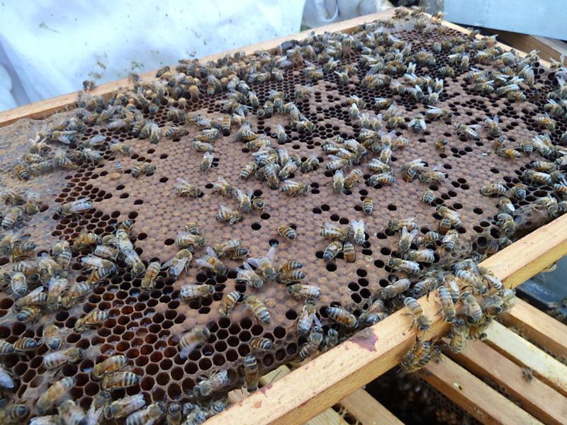 La ruche Bouton blanc