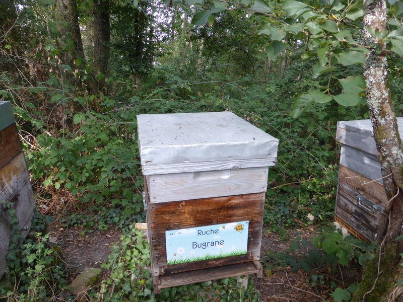 La ruche Bugrane
