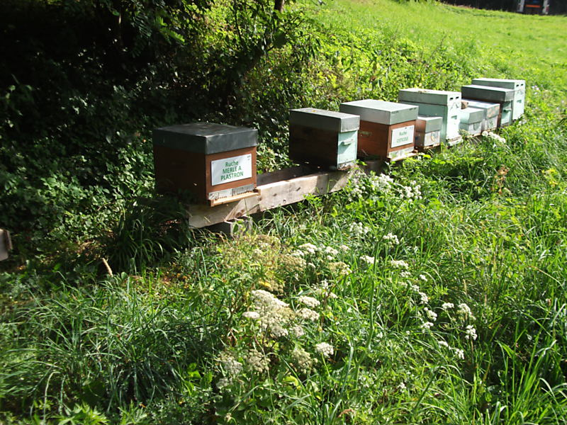 La ruche Océanite