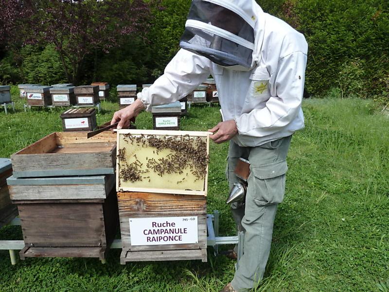 La ruche Campanule raiponce