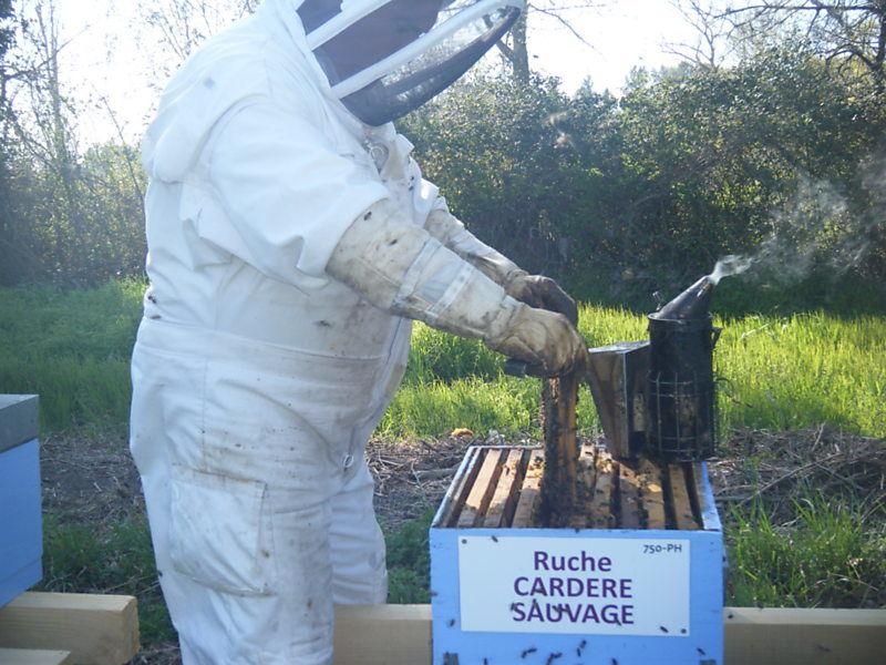 La ruche Cardère sauvage
