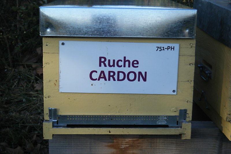 La ruche Cardon