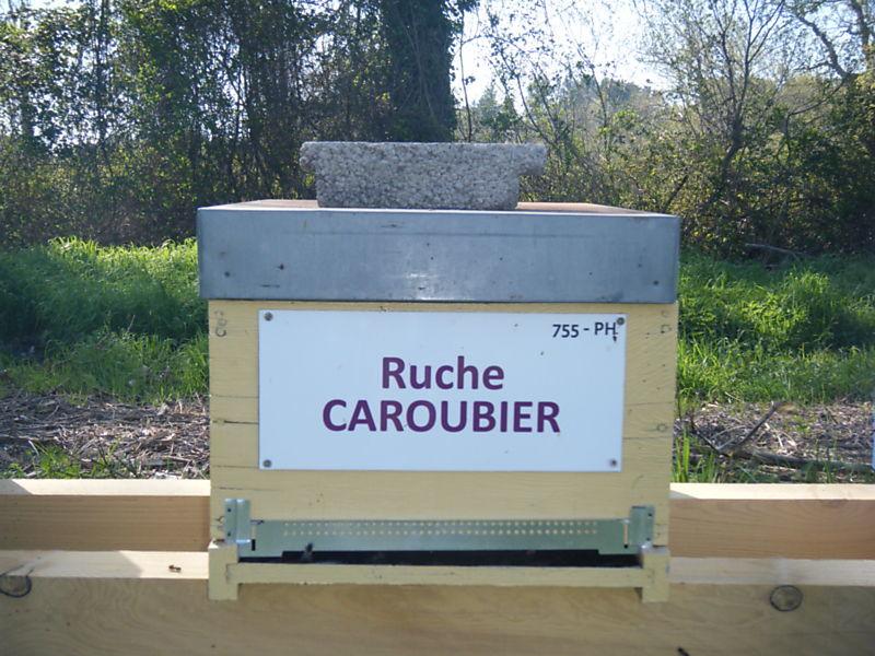 La ruche Caroubier