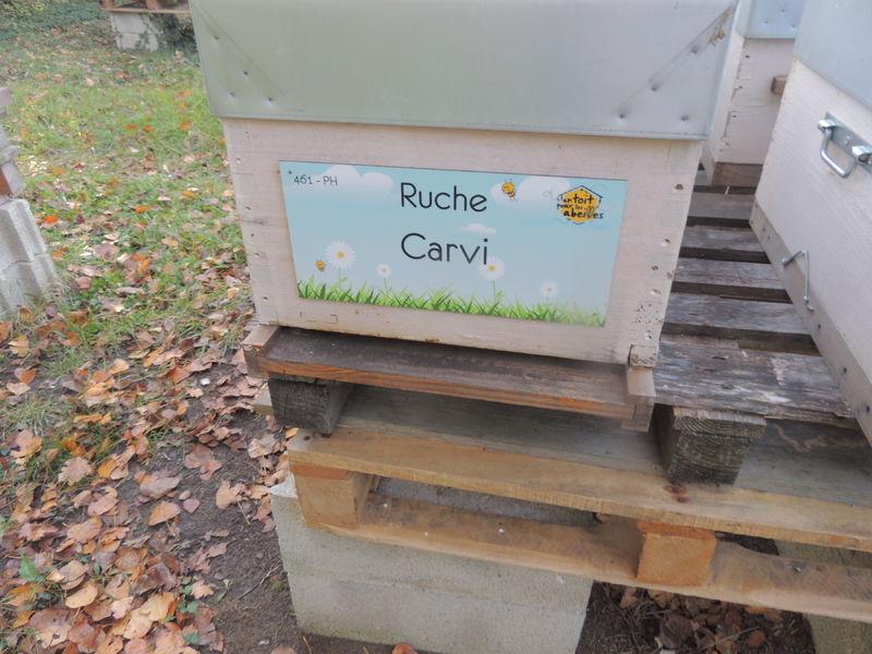 La ruche Carvi