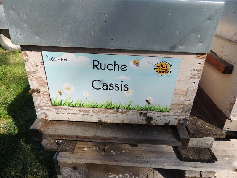 La ruche Cassis
