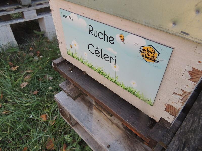 La ruche Céleri