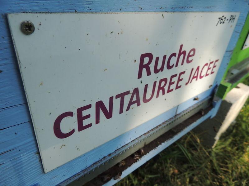 La ruche Centaurée jacée