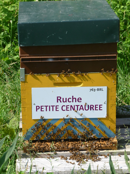 La ruche Petite centaurée