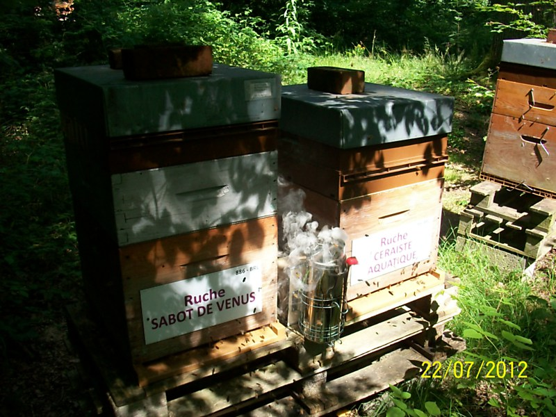 La ruche Ceraiste aquatique