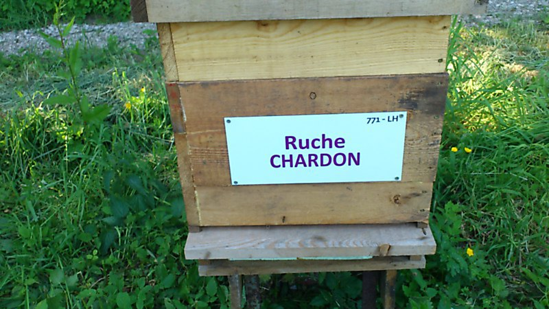 La ruche Chardon