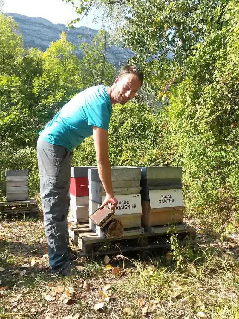 La ruche Chataignier