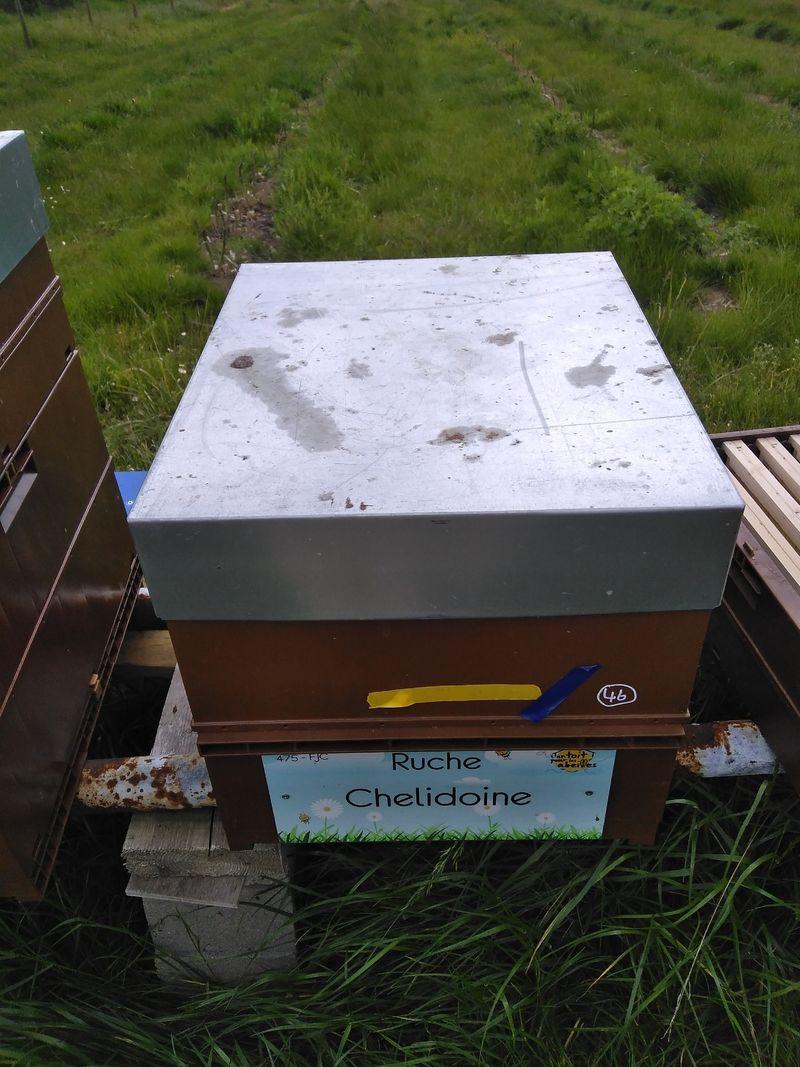 La ruche Chelidoine