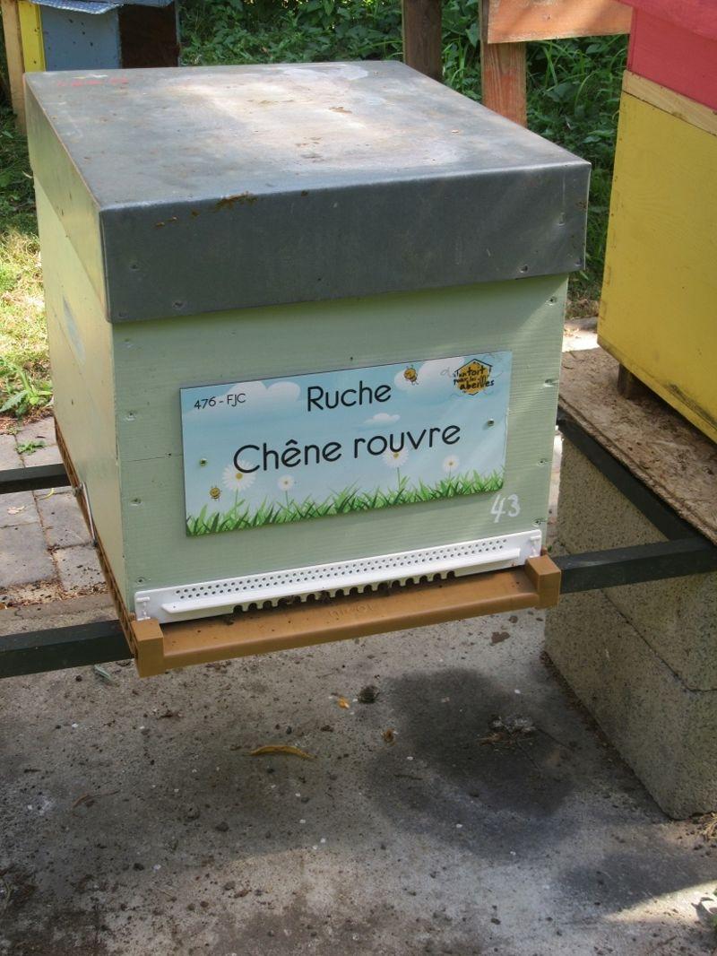 La ruche Chêne rouvre