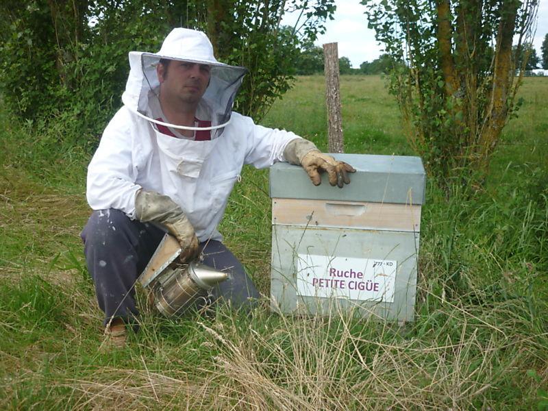 La ruche Petite ciguë