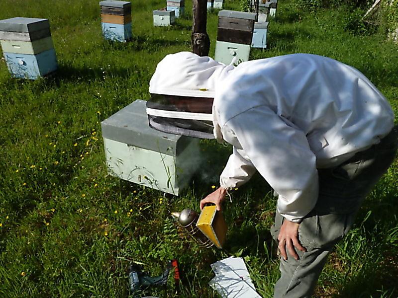 La ruche Colchique