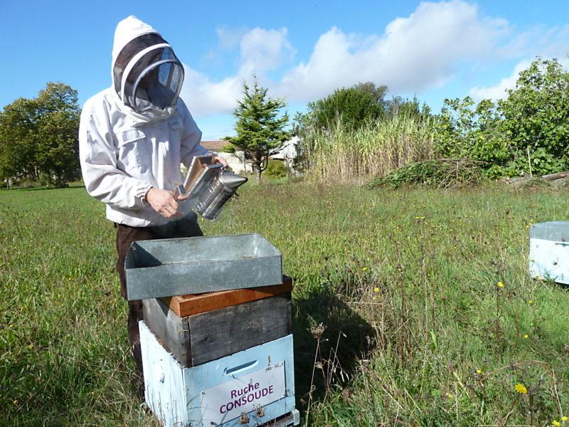 La ruche Consoude