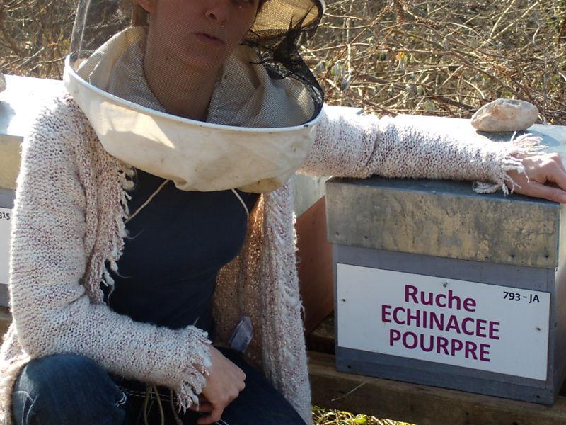 La ruche Echinacee pourpre