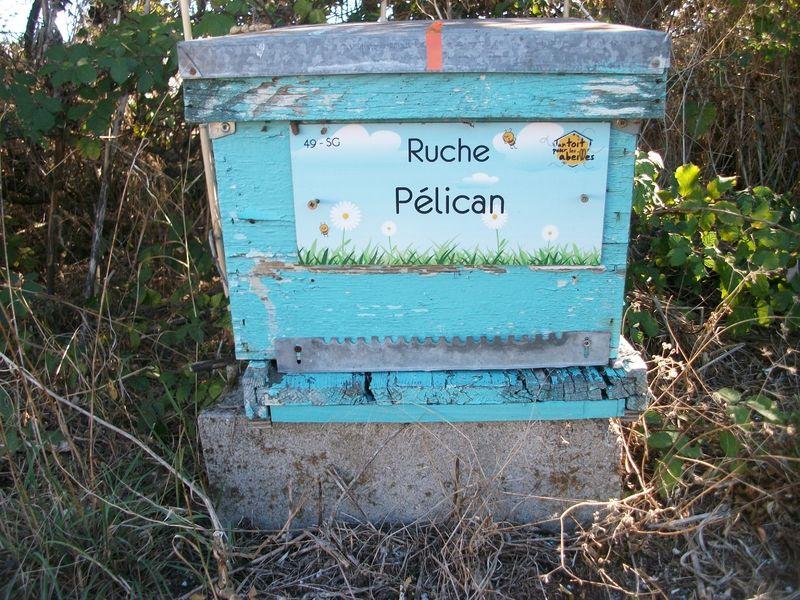 La ruche Pélican