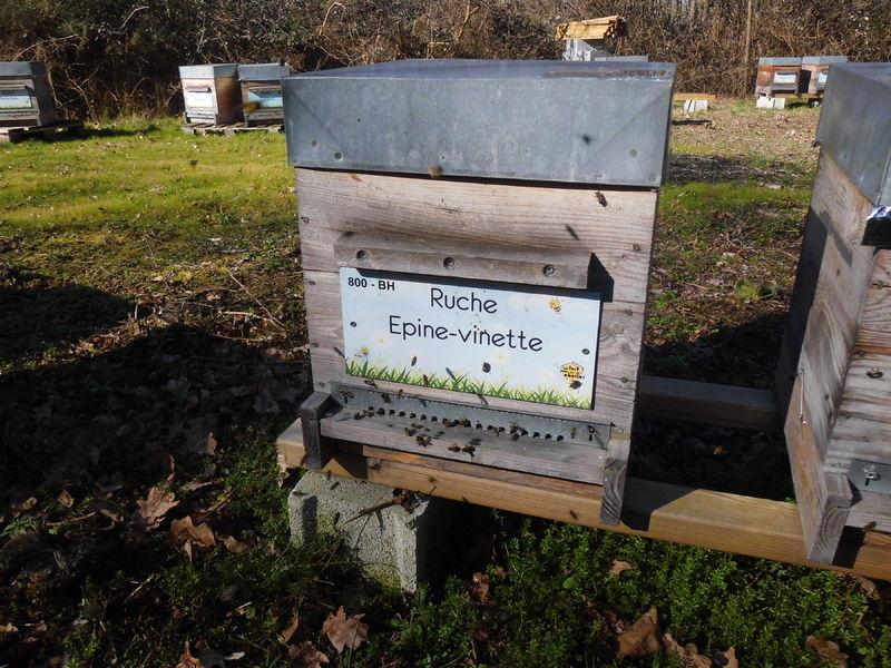 La ruche Epine-vinette