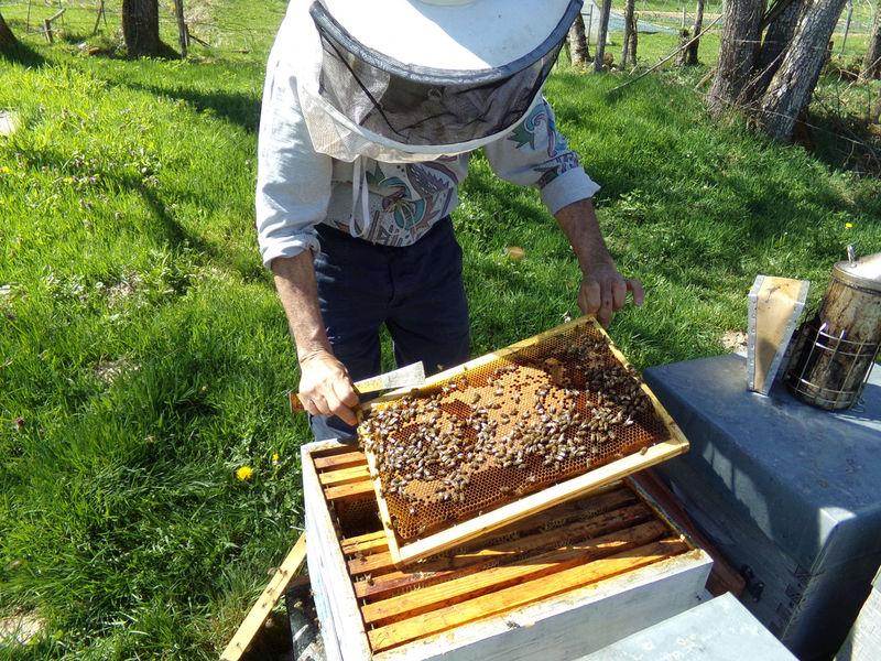 La ruche Erable